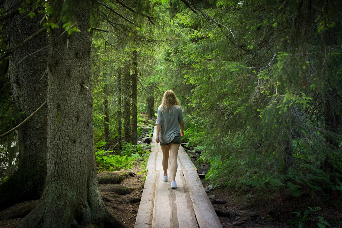 katta-forest