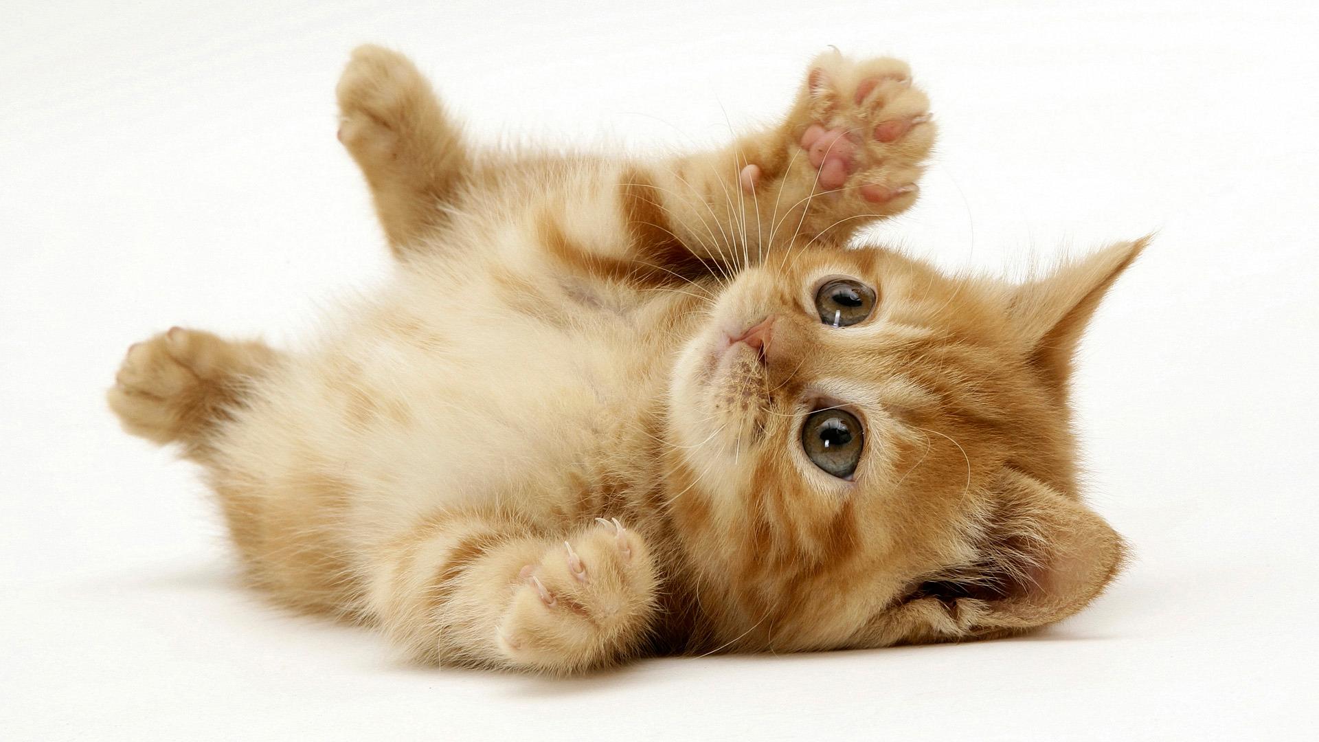 playful-kat