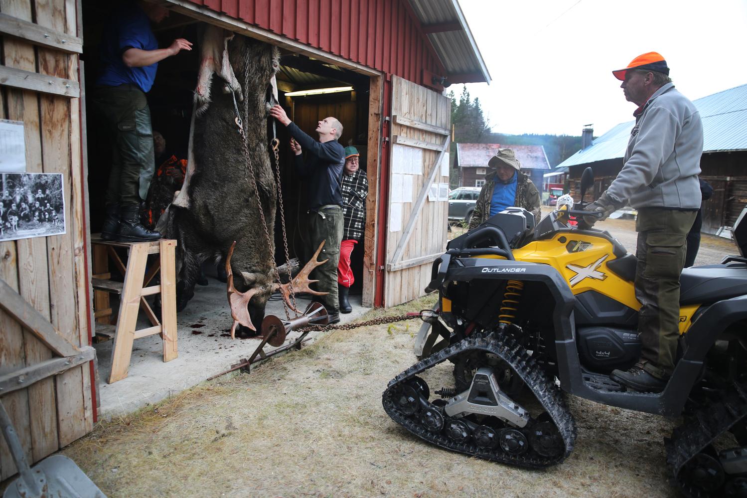 moose-hunt