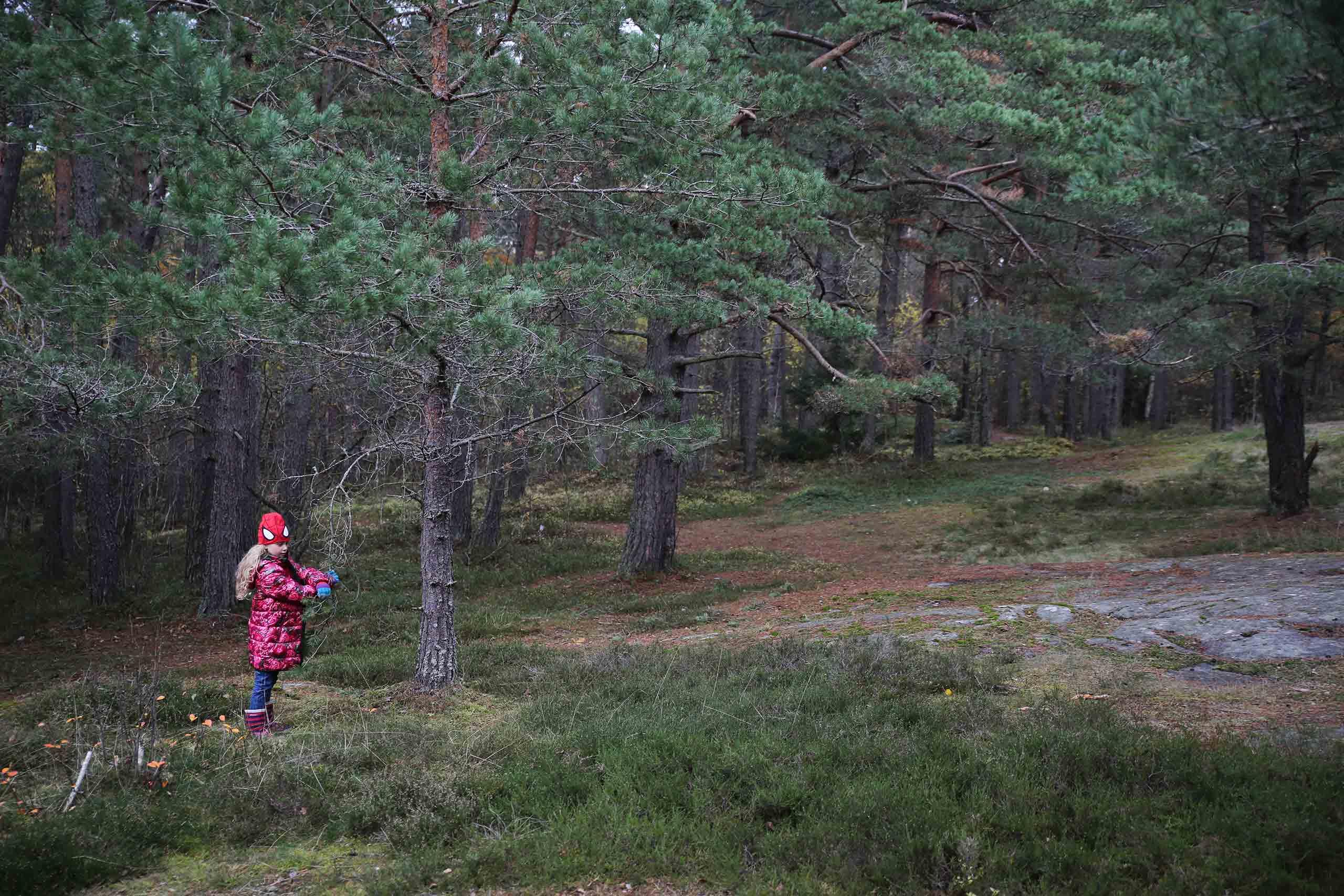 Linnea_forest