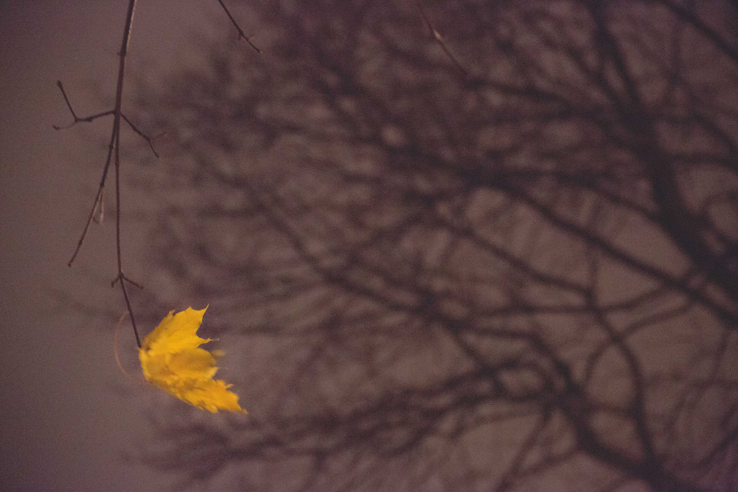 lonely-leaf
