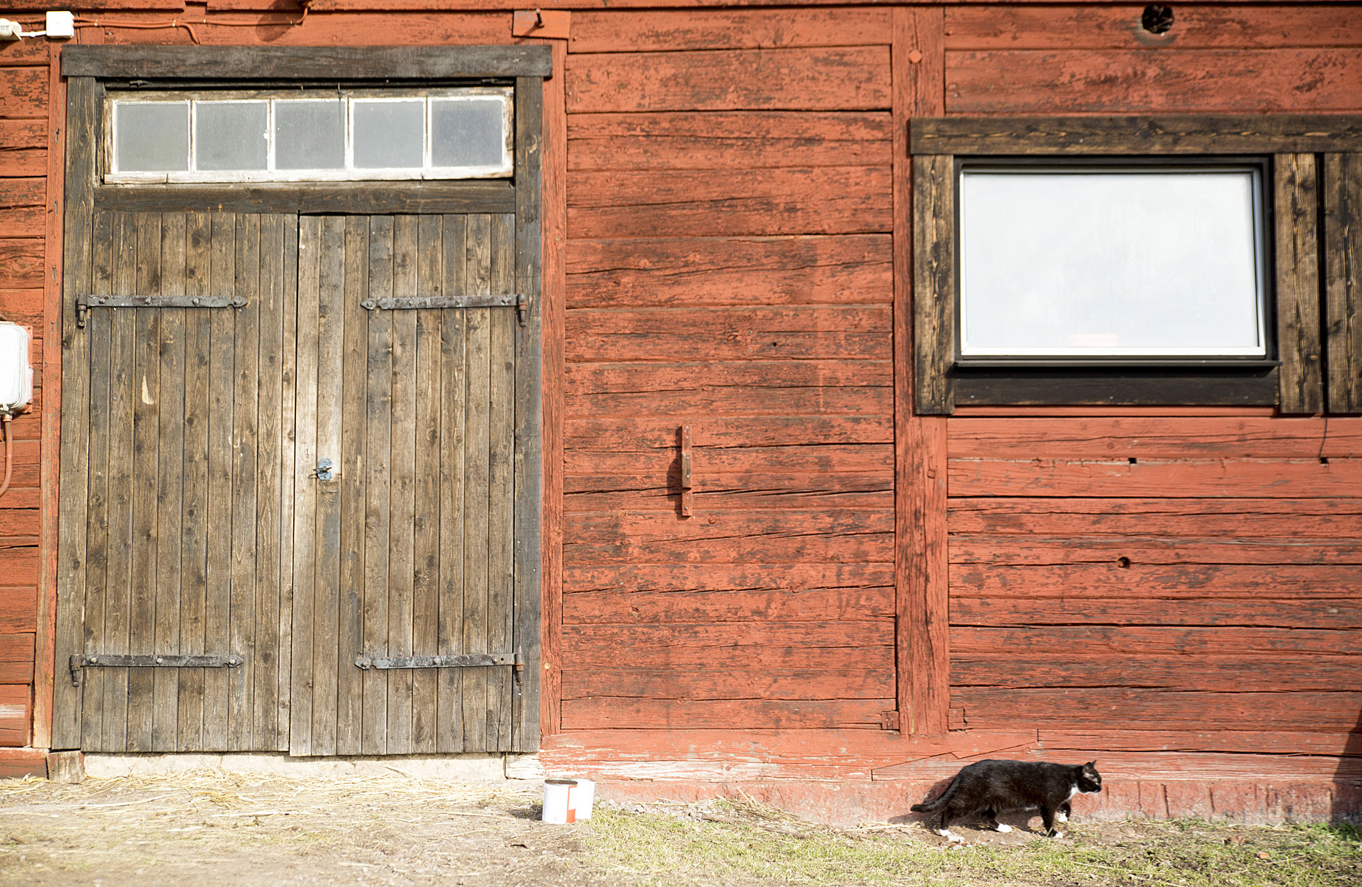 cat-by-barn