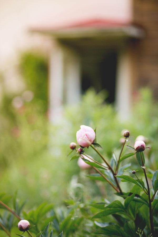 flowers-fide