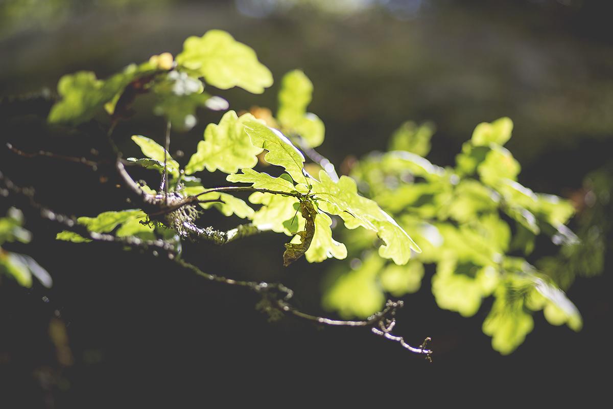 leaves-detail