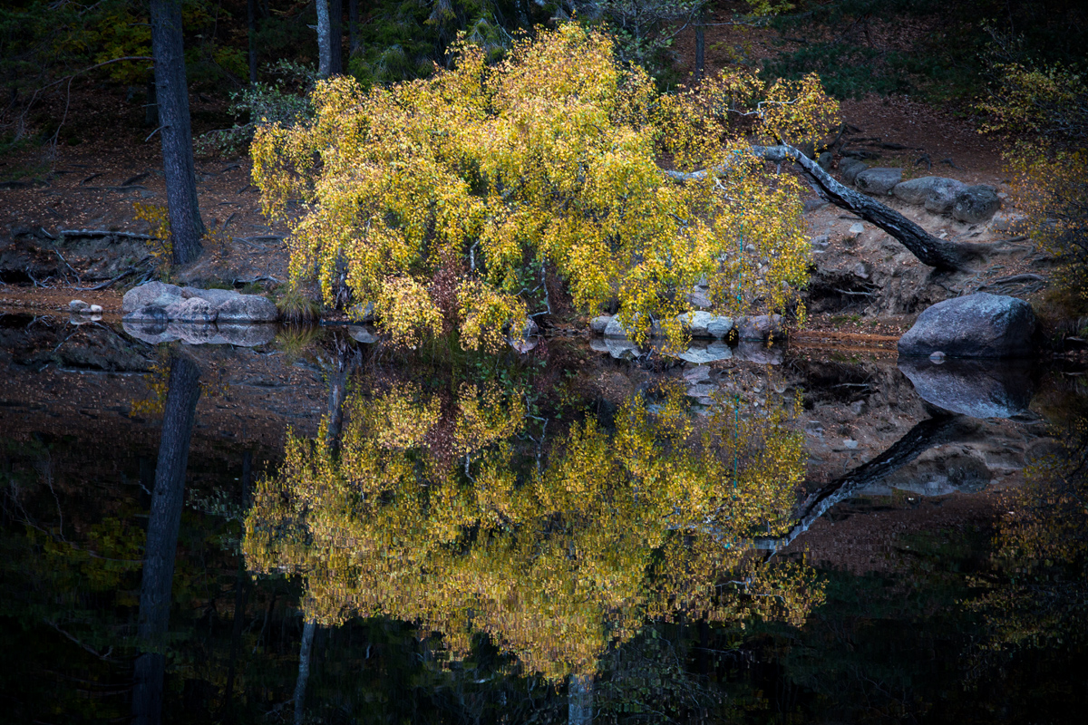 Tree-reflecting