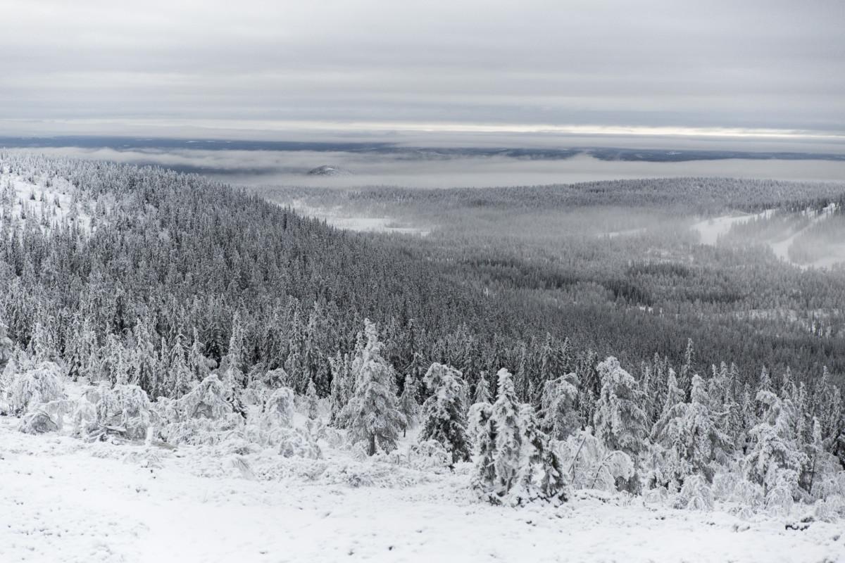 forest-view-stadjan