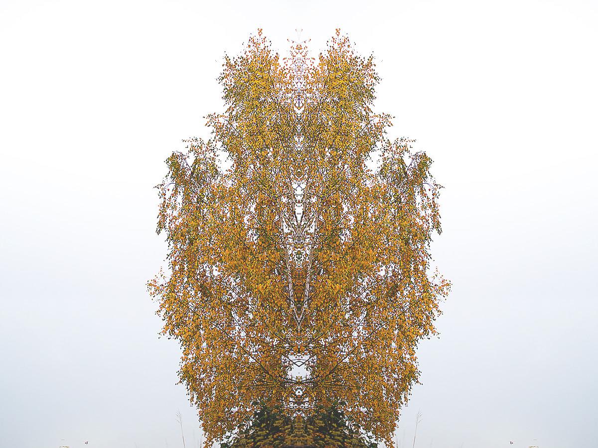 october-trees