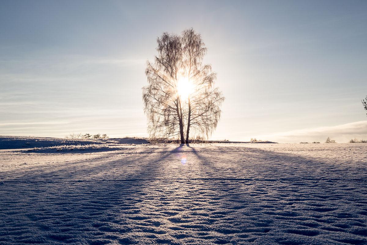 Ensamt-träd