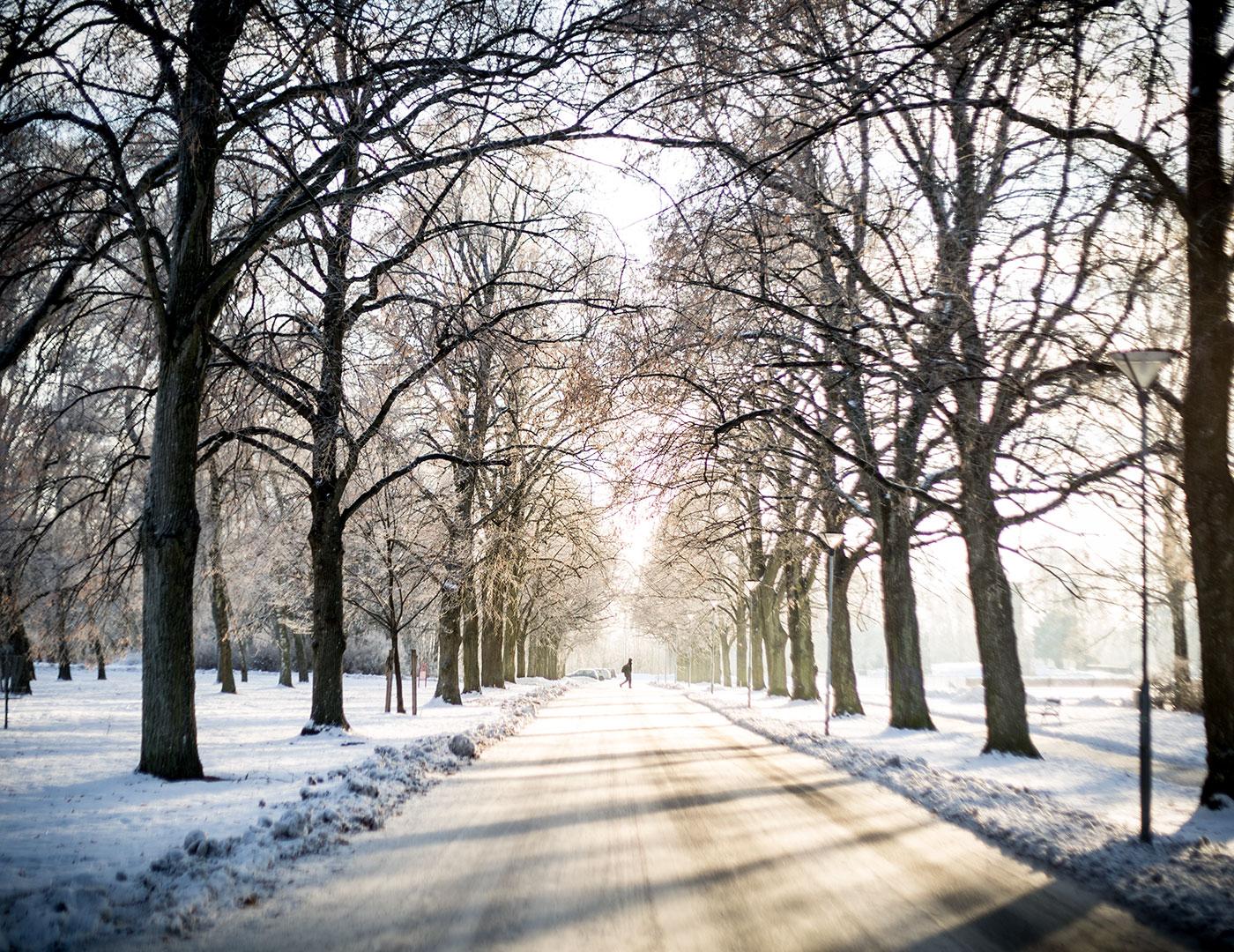 [:sv]Mindfulness och vintern som smalt bort[:]