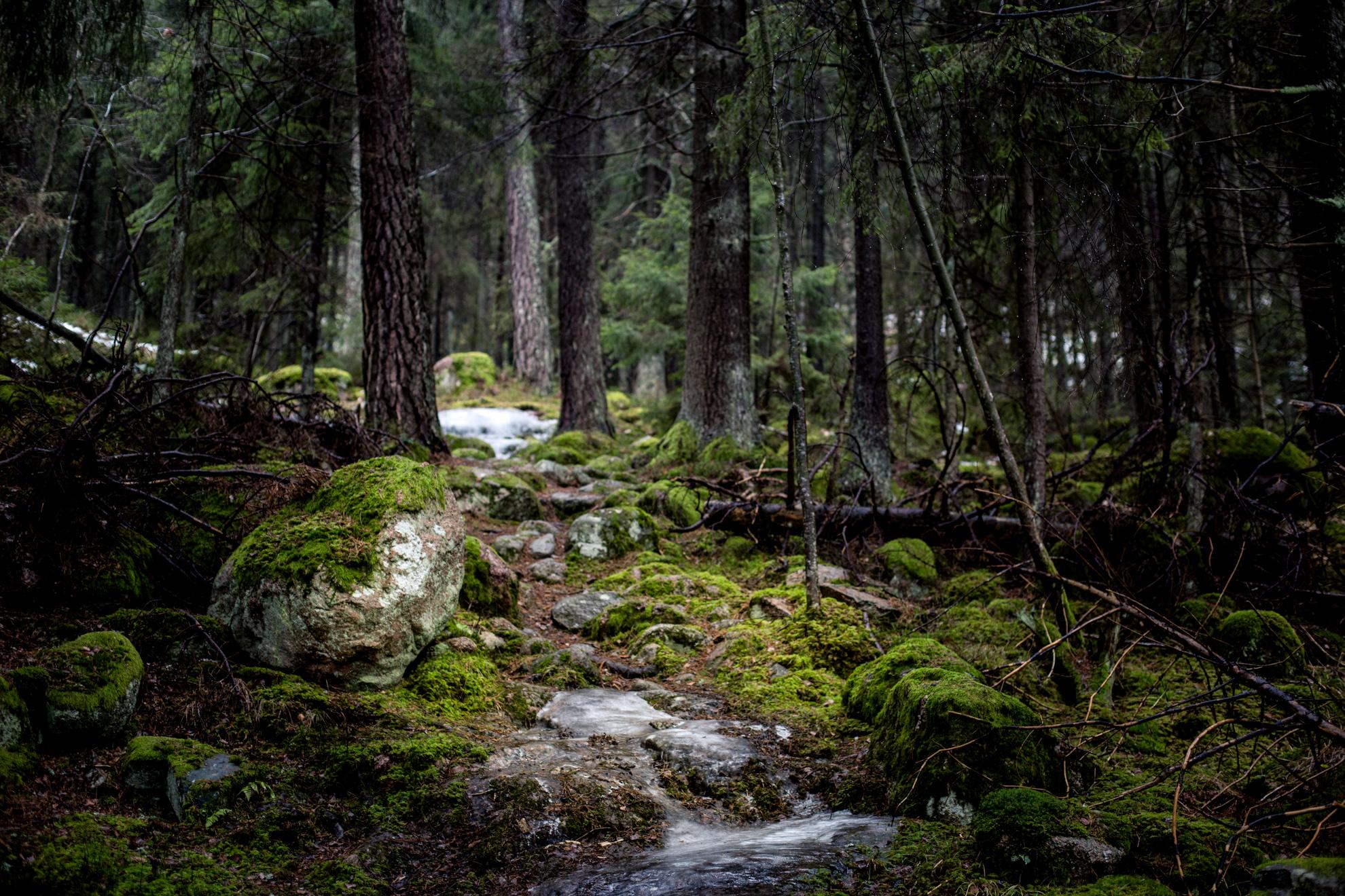 Agelsjon-skogsmystik
