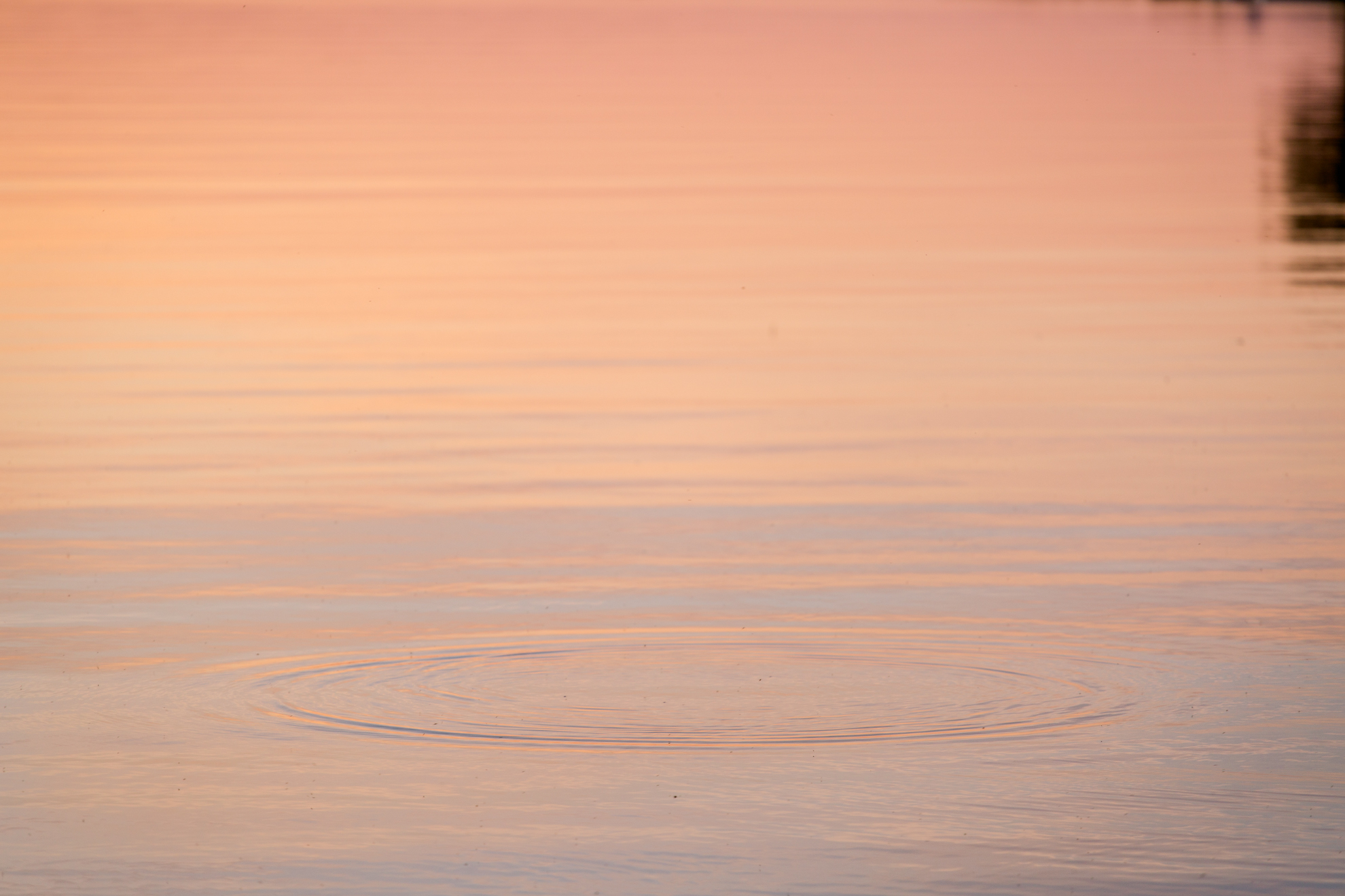 pink-gold-glan