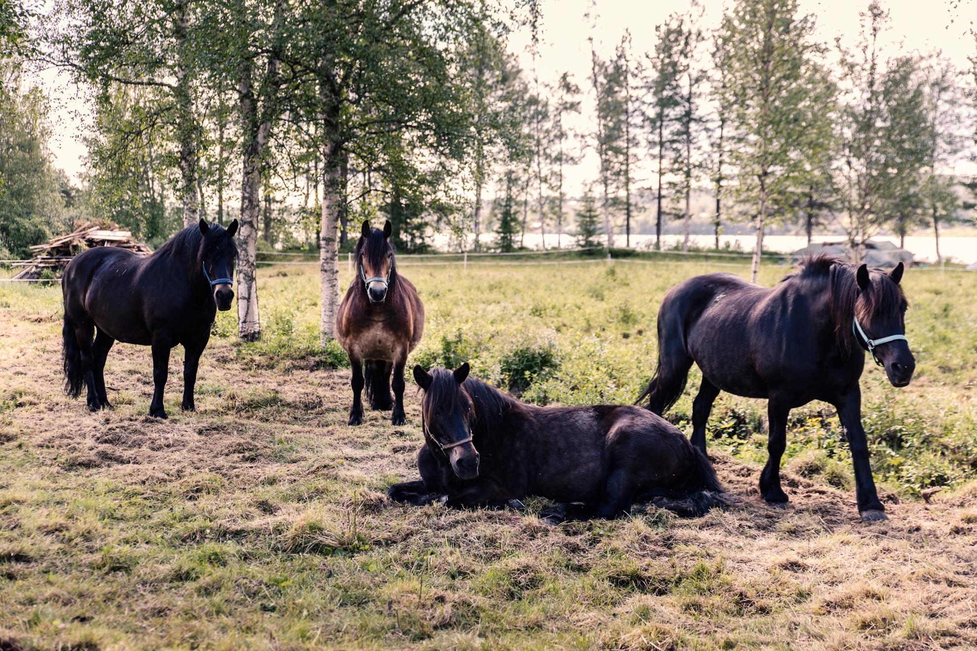 [:sv]Hästveckan i Särna[:]