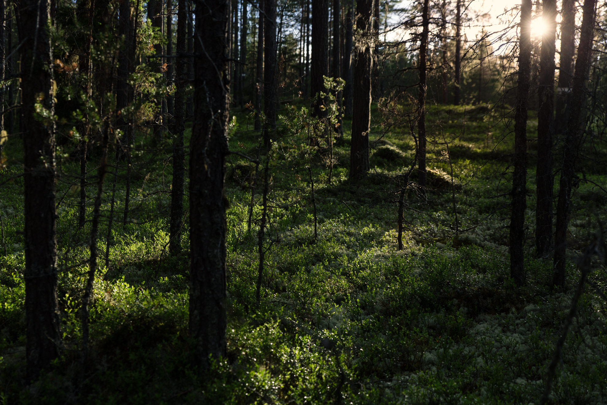 skogens-magi