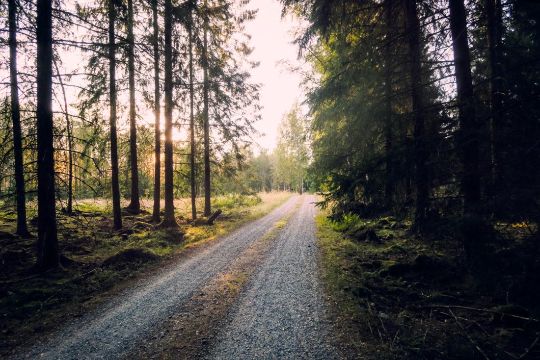 life-design-forest