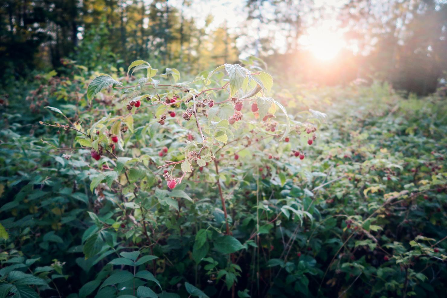 life-design-raspberries