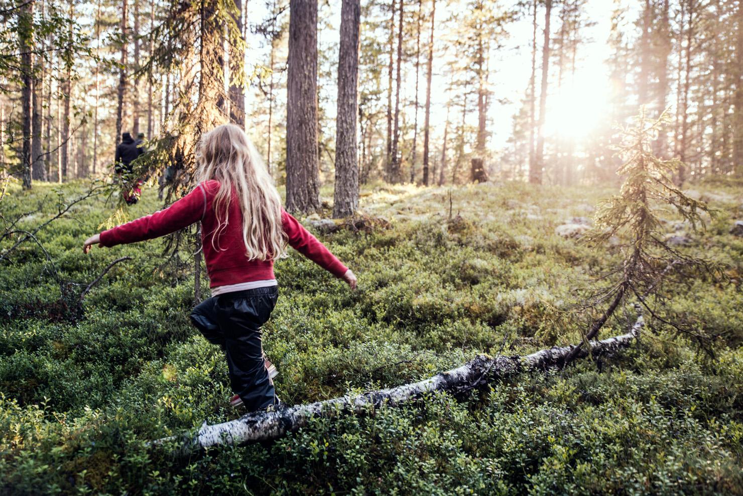 skogsra