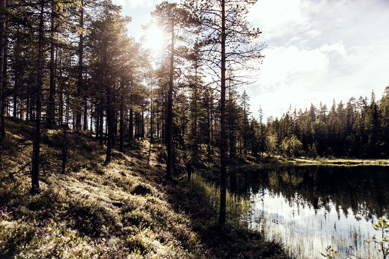 skogstjarn
