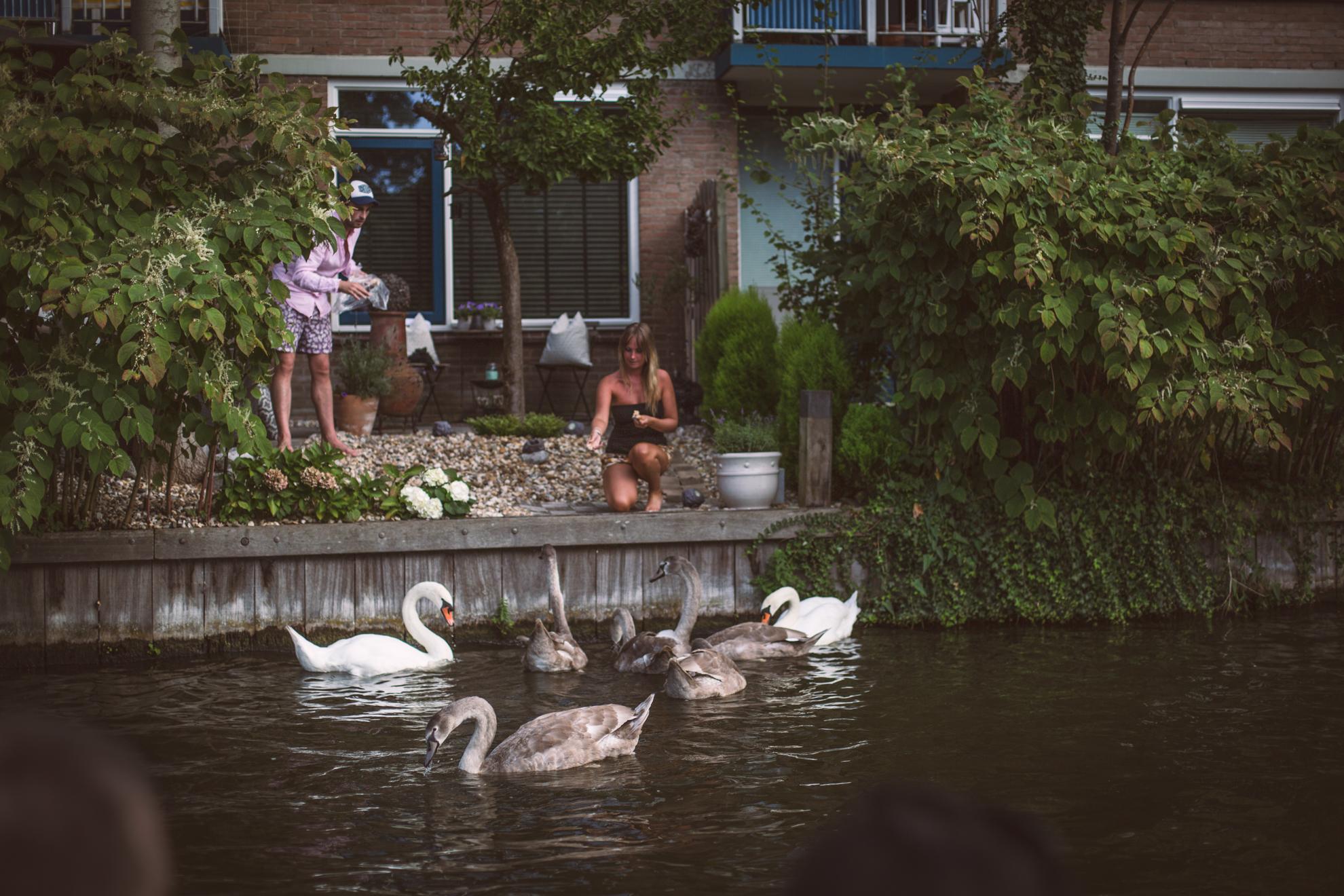svanar-leiden