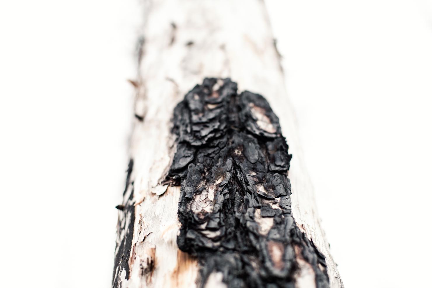 skogsbrand-bark