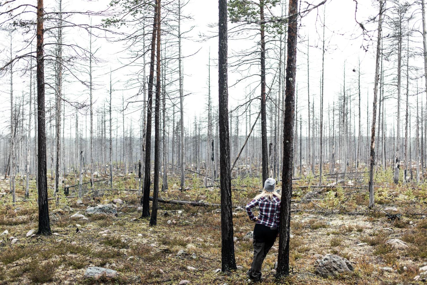 skogsbrand-katta