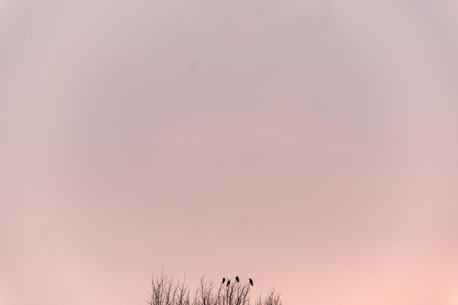 faglar-solnedgang