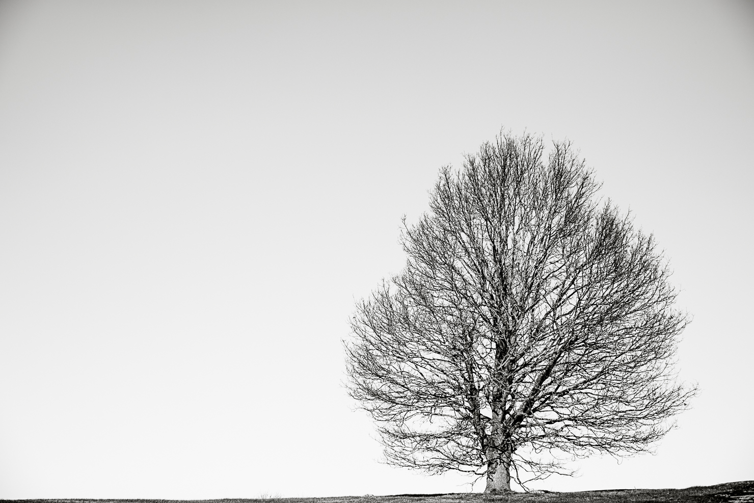 lonely-tree-bw