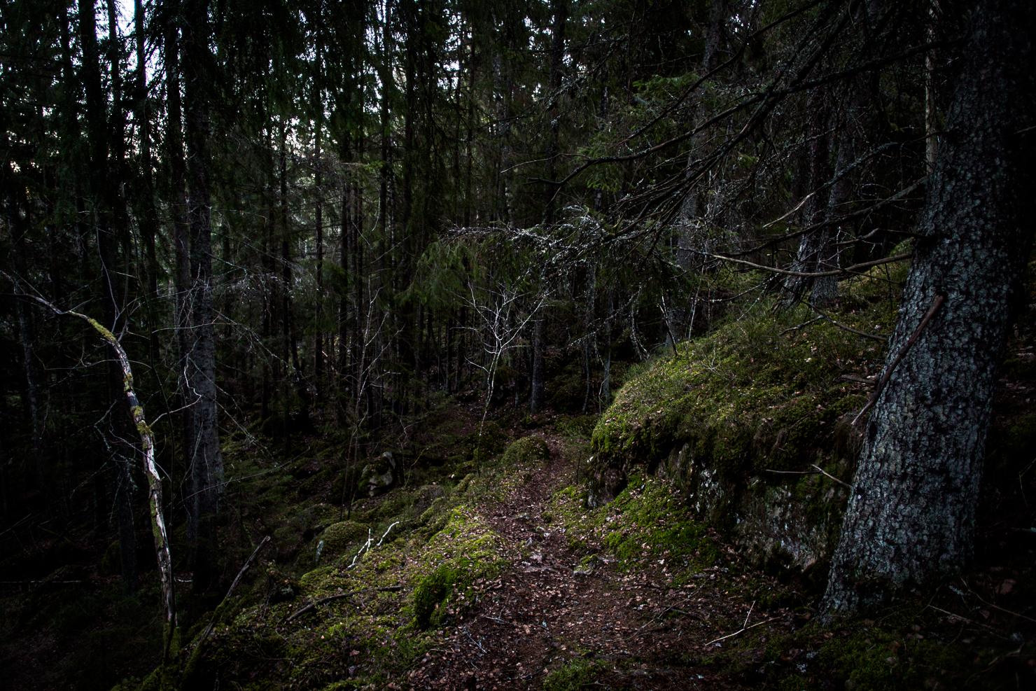 skog-agelsjon