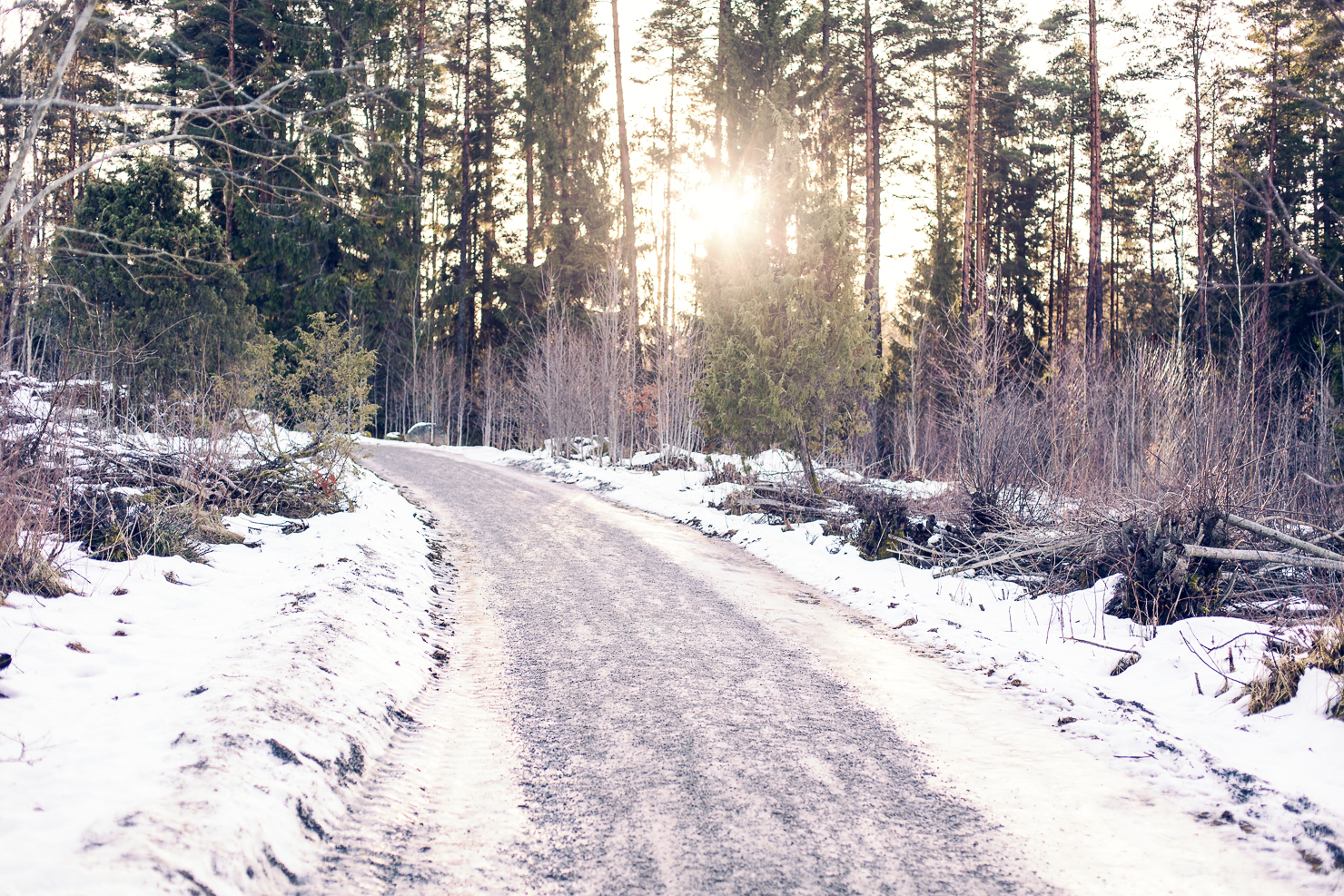 jarvafaltet-skogssol