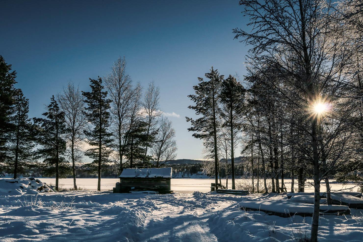 sarna-vinter-2