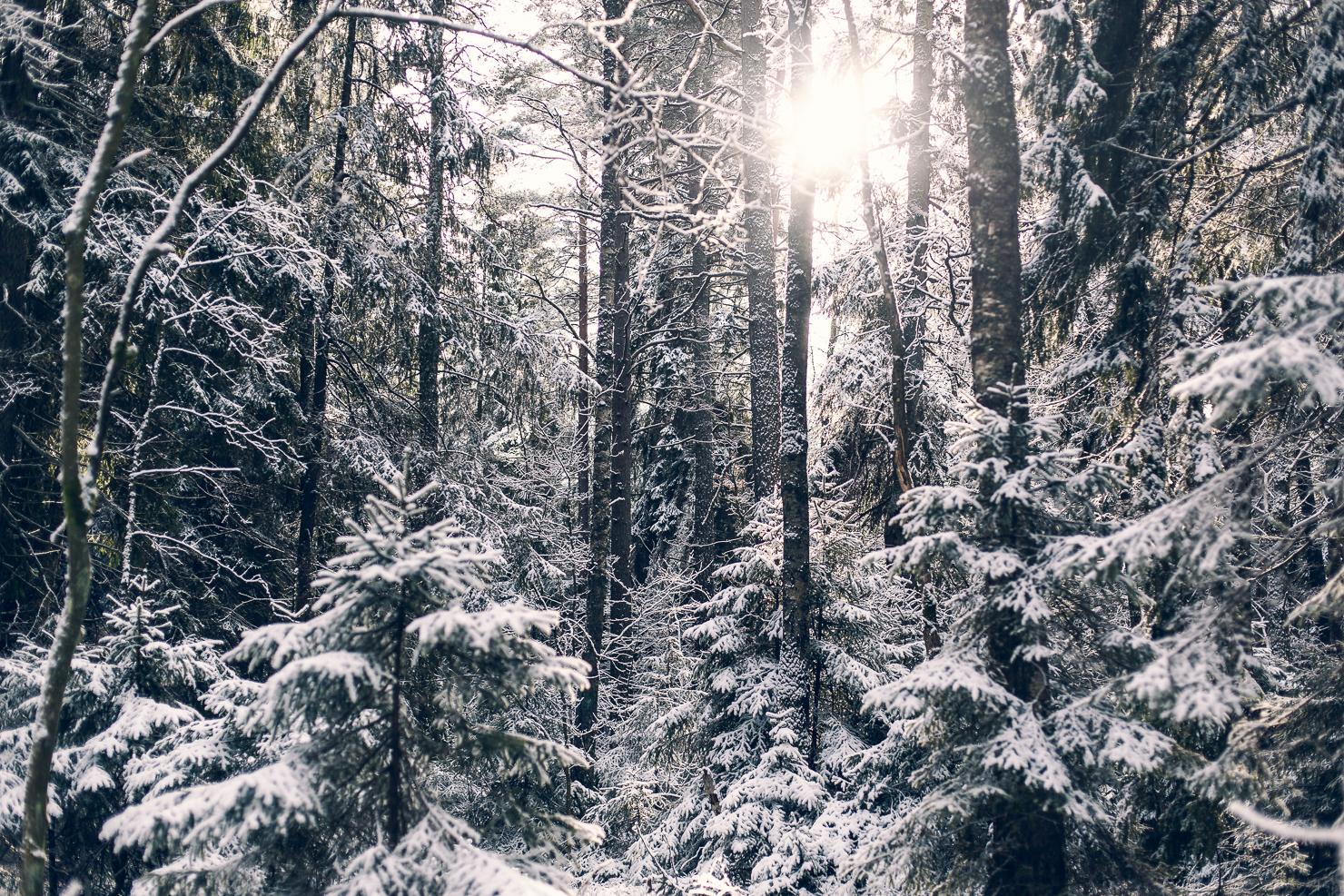 Mellan vinter och vår på Järvafältet