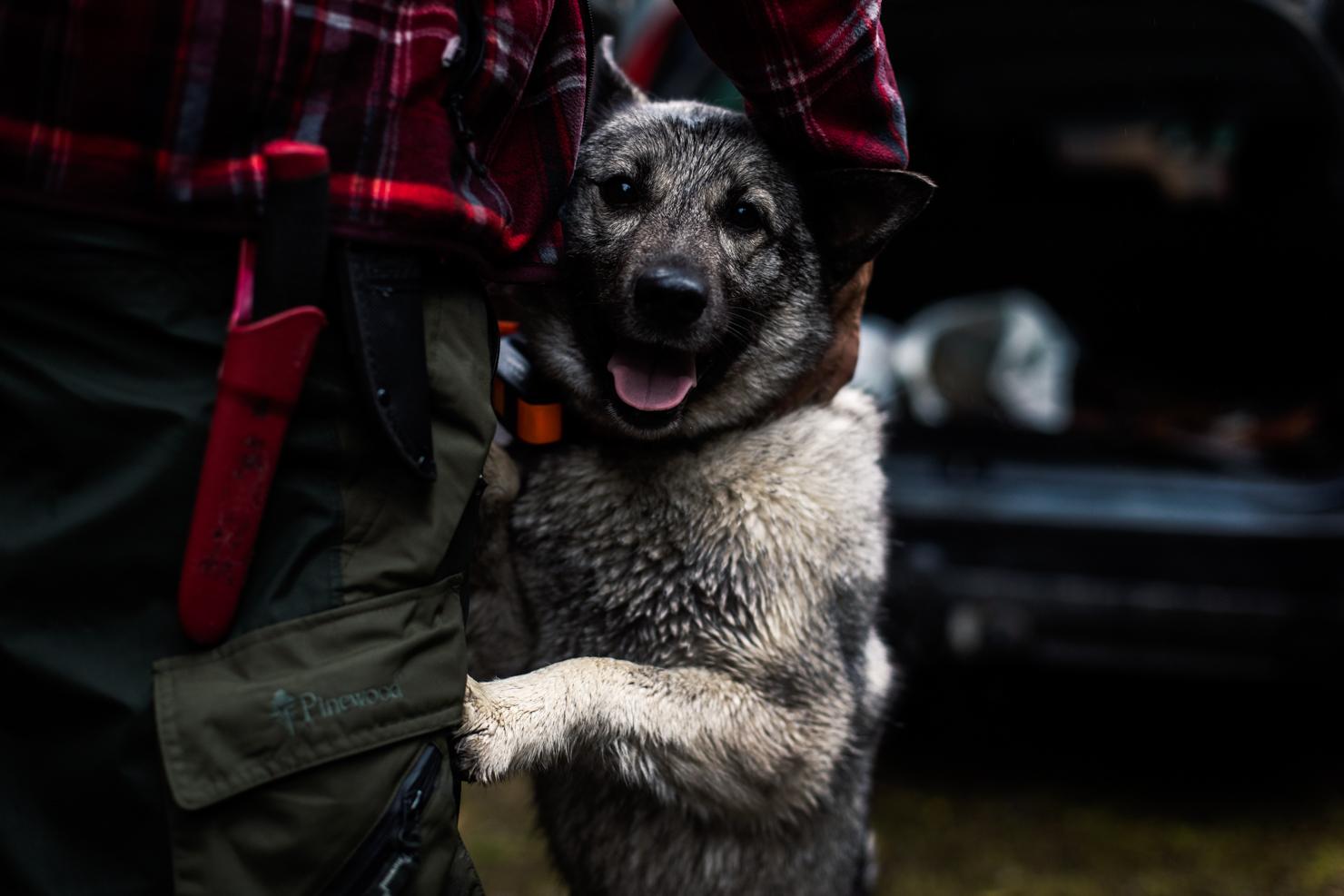 Tia, den duktiga älghunden