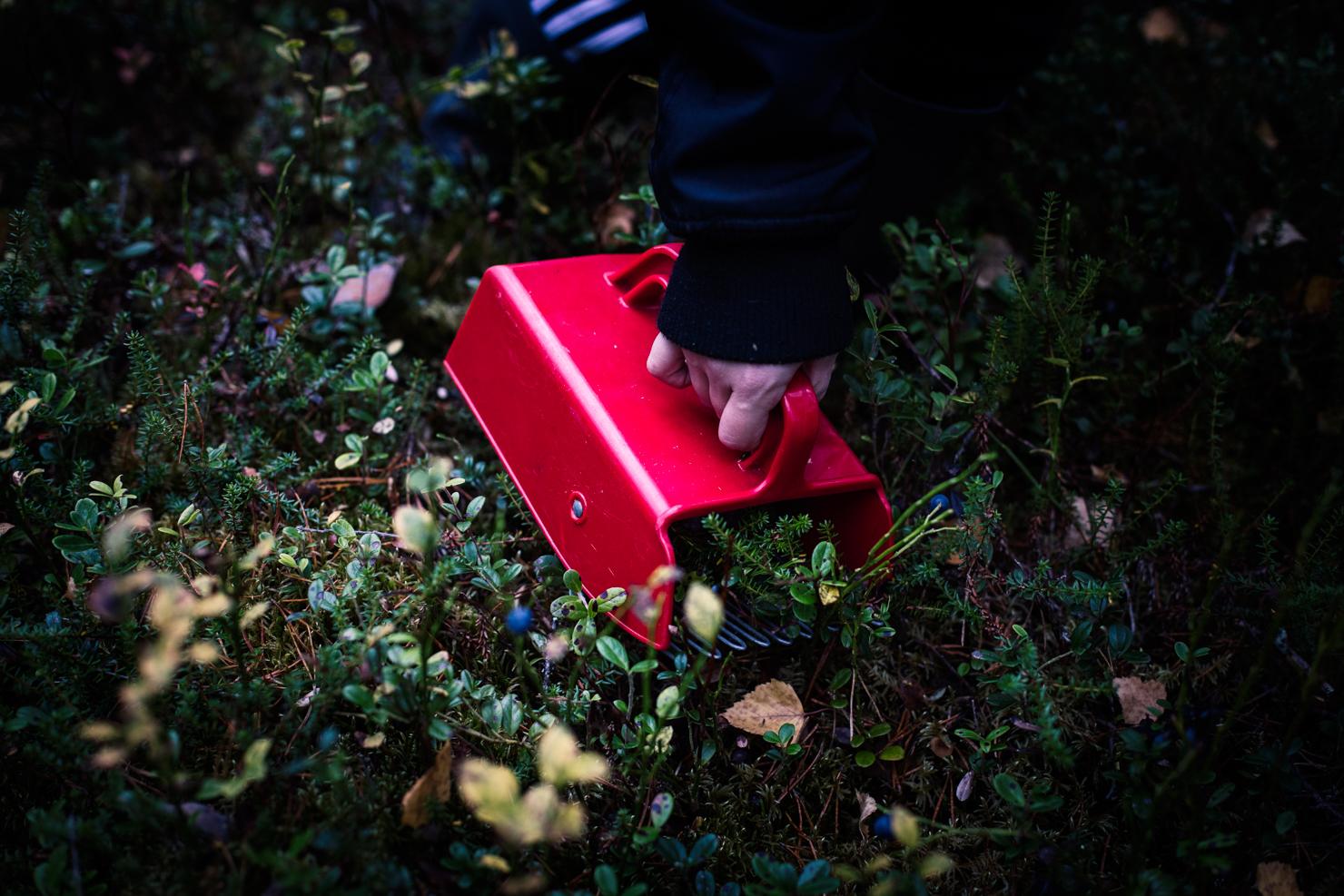Nordsvenskar, eld och friska bad – helggöra i Särna