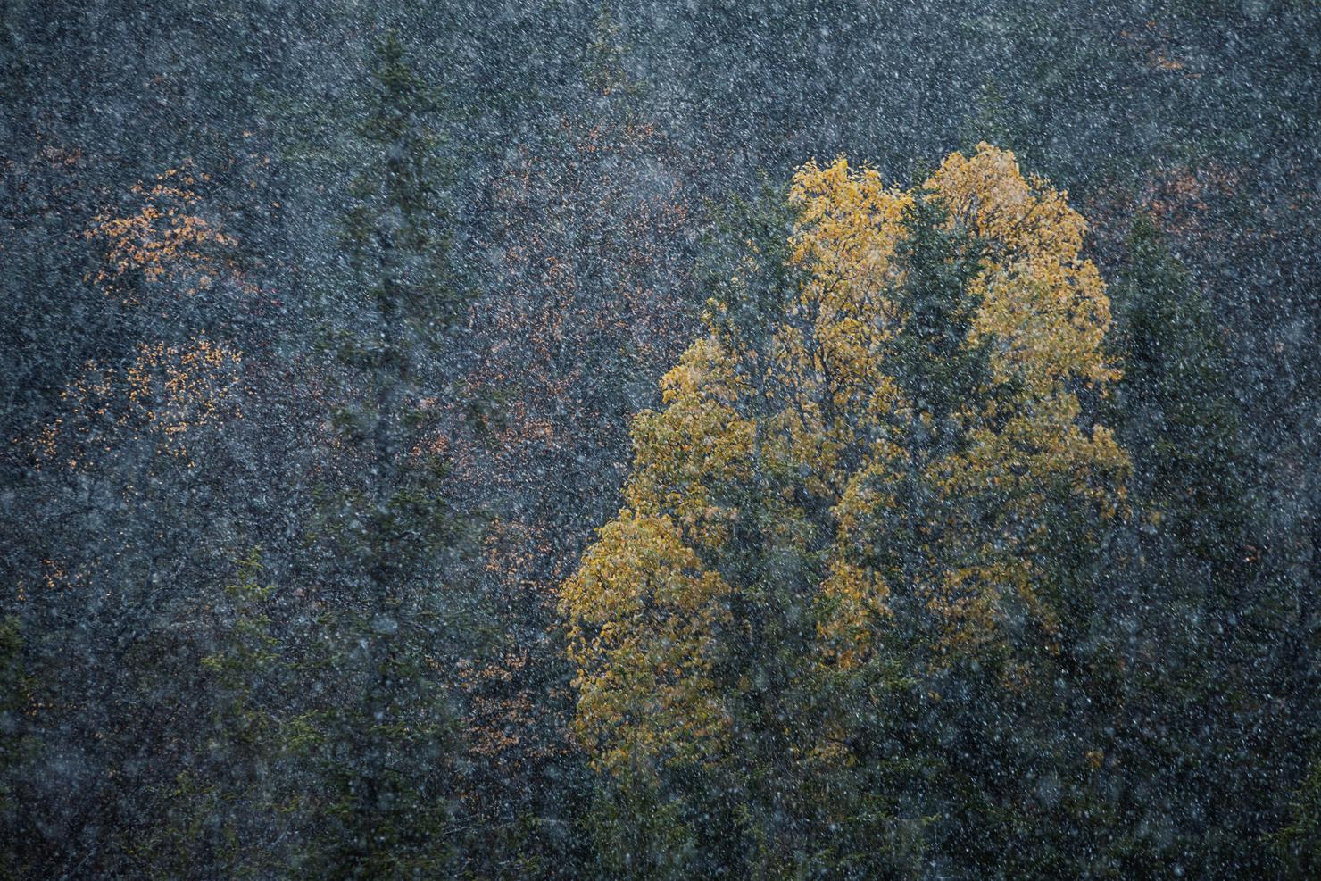 Första snön på Fulufjället