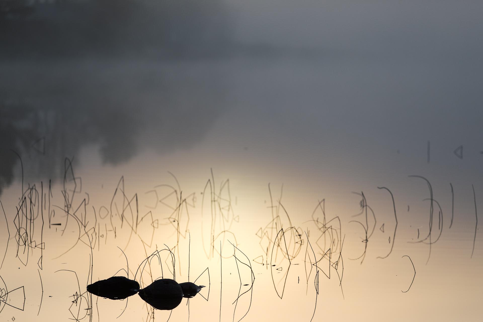 Spegelblankt och dimma