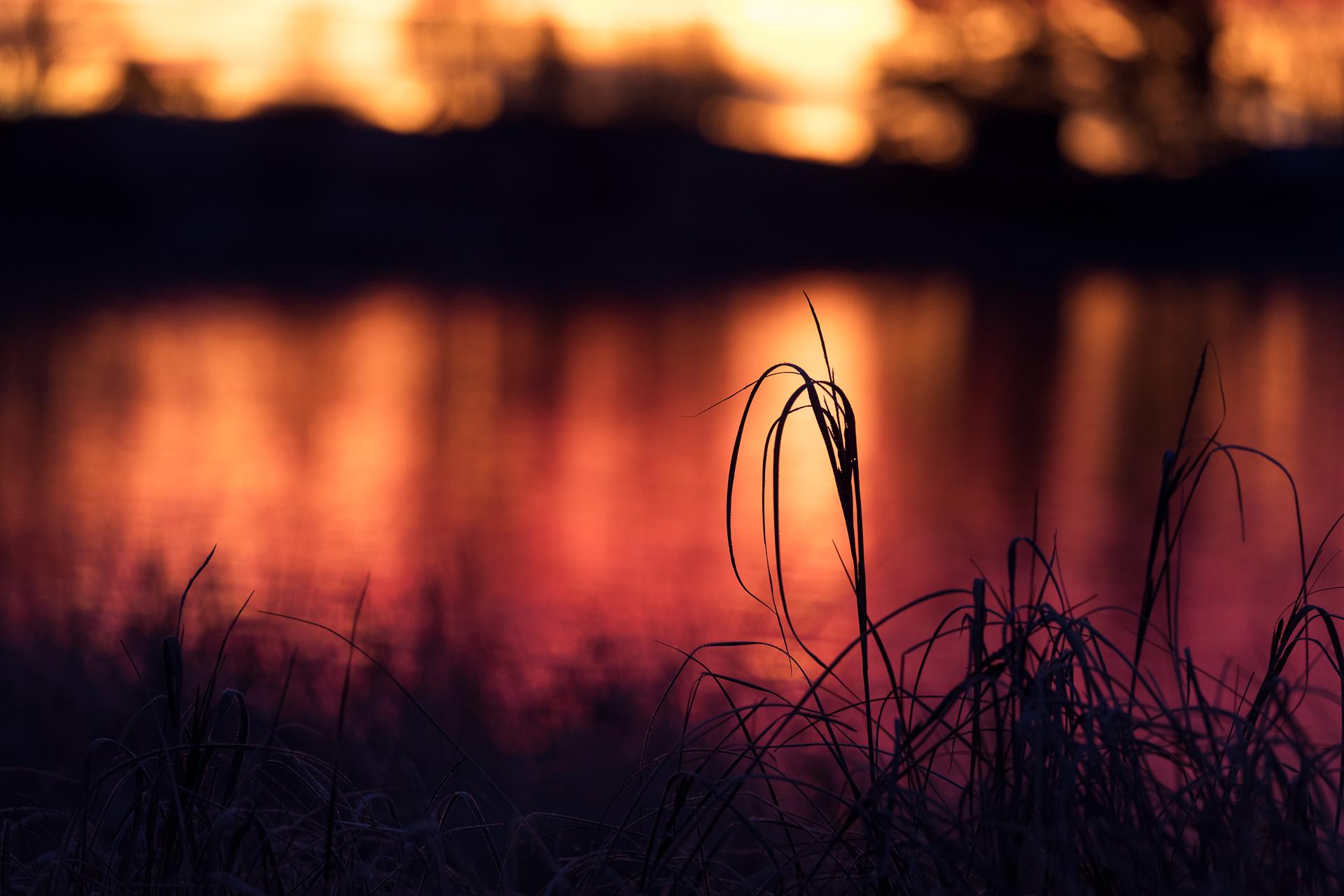 Frost, gräs och soluppgång